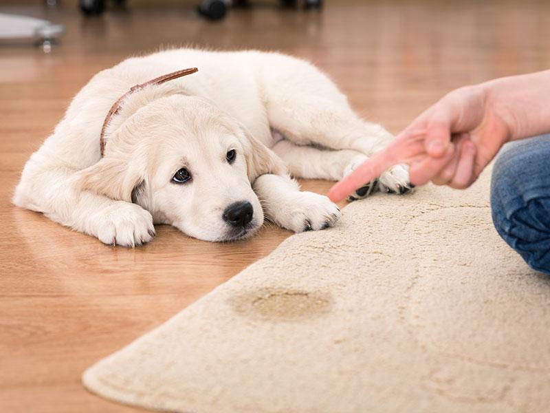 nauka-czystości-psa