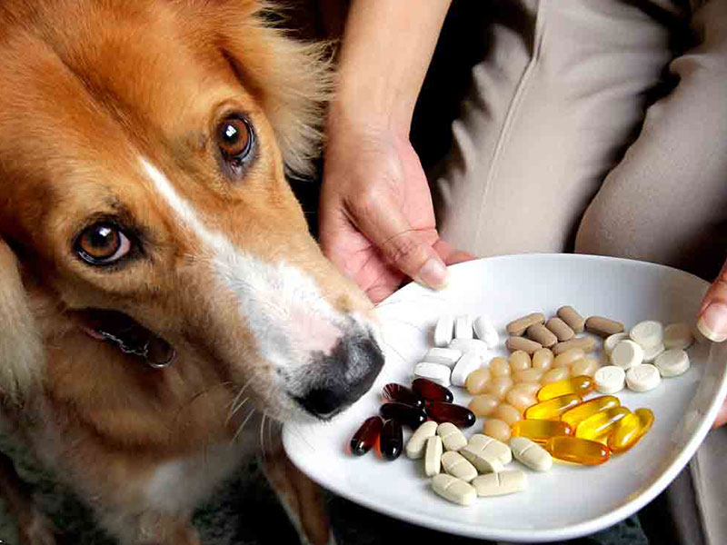 tabletki-dla-psa